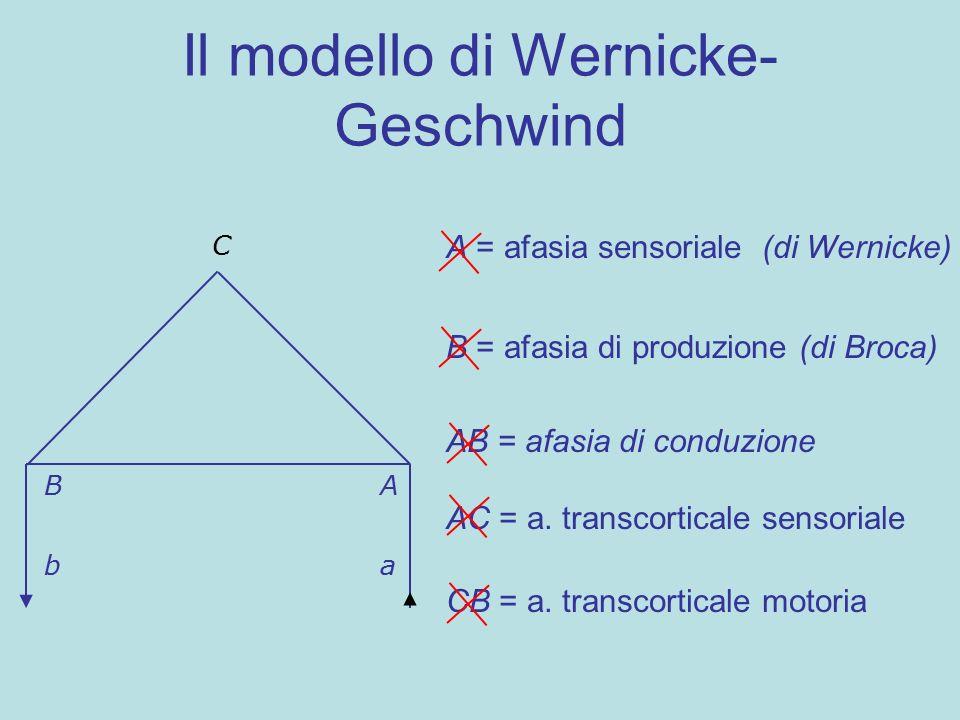 Il modello di Wernicke- Geschwind BA C ba A = afasia sensoriale (di Wernicke) B = afasia di produzione (di Broca) AB = afasia di conduzione AC = a. tr
