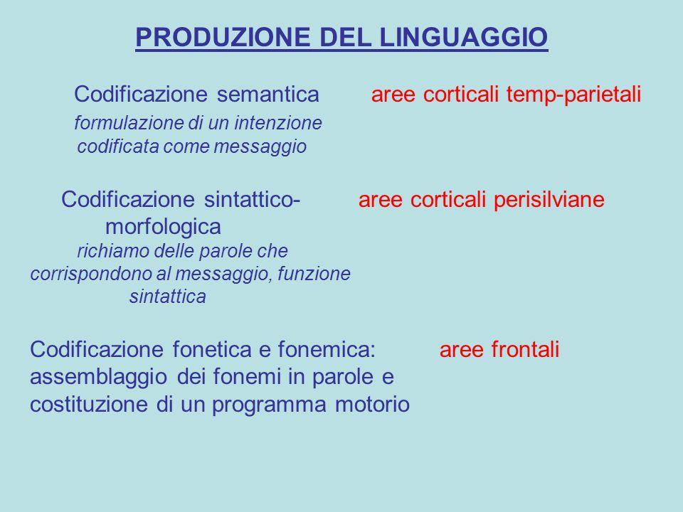 PRODUZIONE DEL LINGUAGGIO Codificazione semantica aree corticali temp-parietali formulazione di un intenzione codificata come messaggio Codificazione