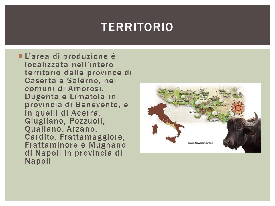  L'area di produzione è localizzata nell'intero territorio delle province di Caserta e Salerno, nei comuni di Amorosi, Dugenta e Limatola in provinci