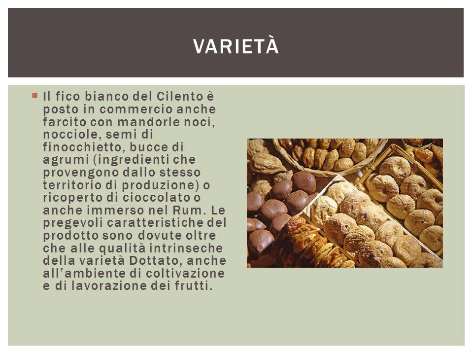  Il fico bianco del Cilento è posto in commercio anche farcito con mandorle noci, nocciole, semi di finocchietto, bucce di agrumi (ingredienti che pr