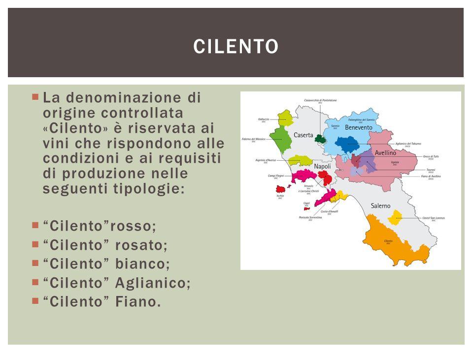  La denominazione di origine controllata «Cilento» è riservata ai vini che rispondono alle condizioni e ai requisiti di produzione nelle seguenti tip