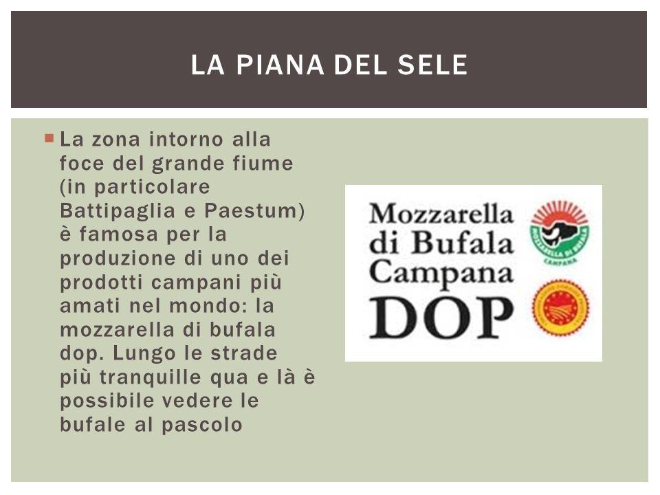  La zona intorno alla foce del grande fiume (in particolare Battipaglia e Paestum) è famosa per la produzione di uno dei prodotti campani più amati n