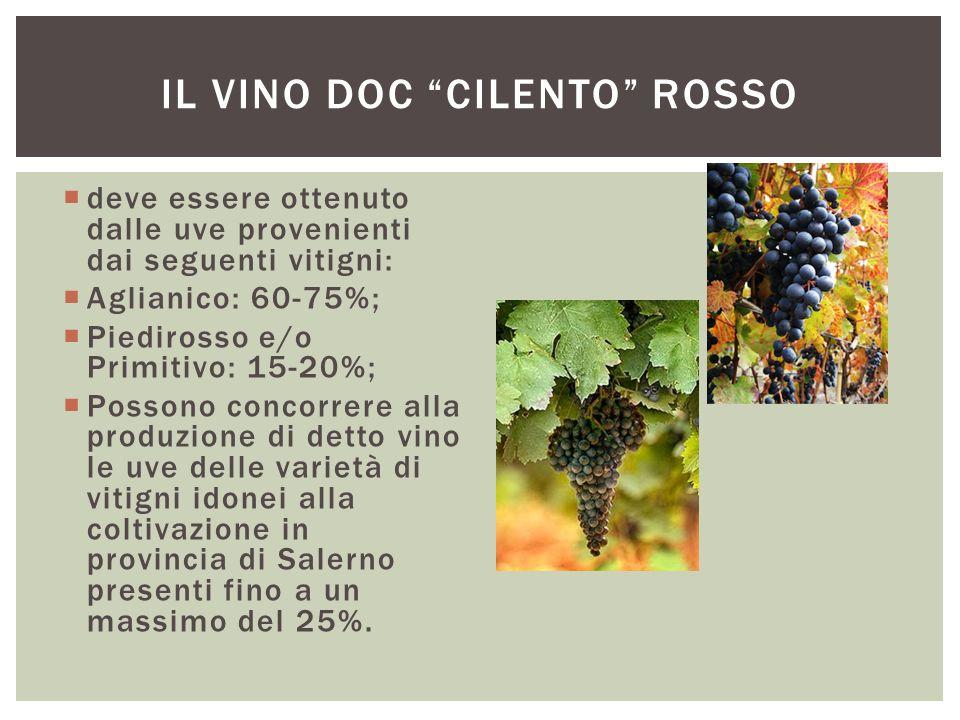  deve essere ottenuto dalle uve provenienti dai seguenti vitigni:  Aglianico: 60-75%;  Piedirosso e/o Primitivo: 15-20%;  Possono concorrere alla