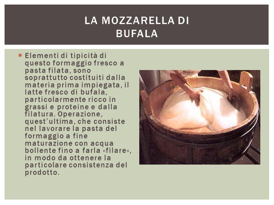  Elementi di tipicità di questo formaggio fresco a pasta filata, sono soprattutto costituiti dalla materia prima impiegata, il latte fresco di bufala