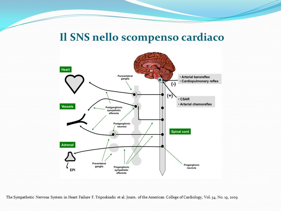 Il SNS nello scompenso cardiaco The Sympathetic Nervous System in Heart Failure F. Triposkiadis et al. Journ. of the American College of Cardiology, V