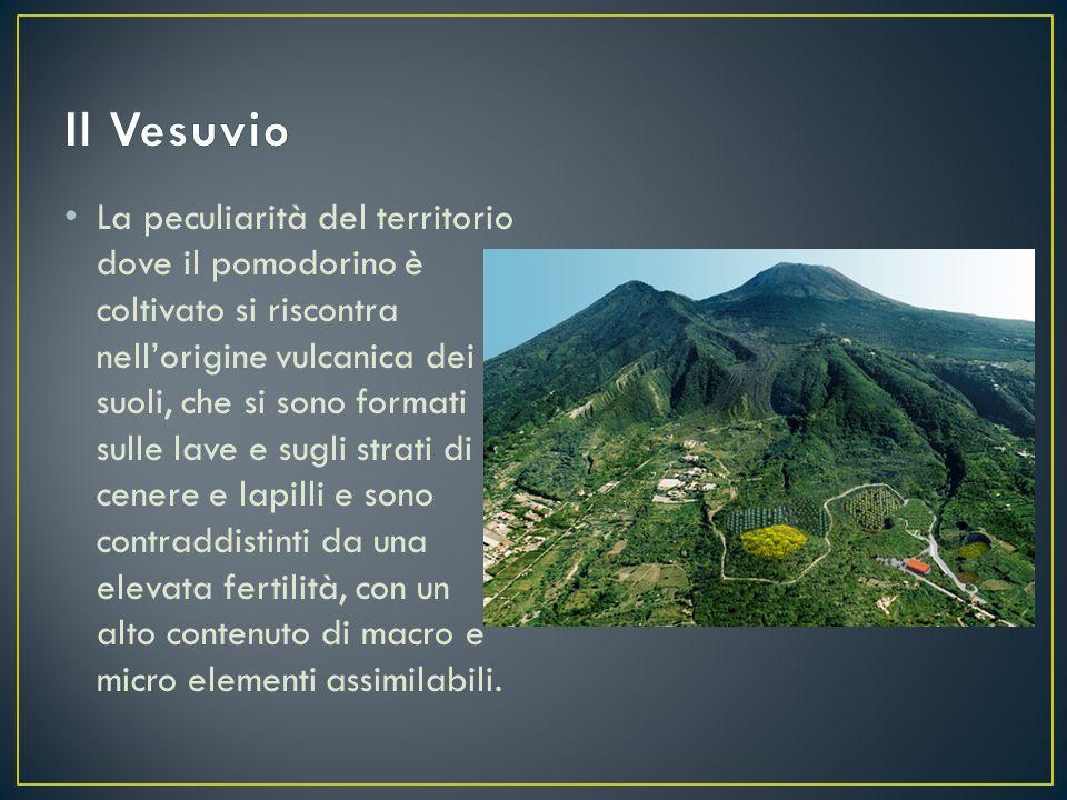 La peculiarità del territorio dove il pomodorino è coltivato si riscontra nell'origine vulcanica dei suoli, che si sono formati sulle lave e sugli str