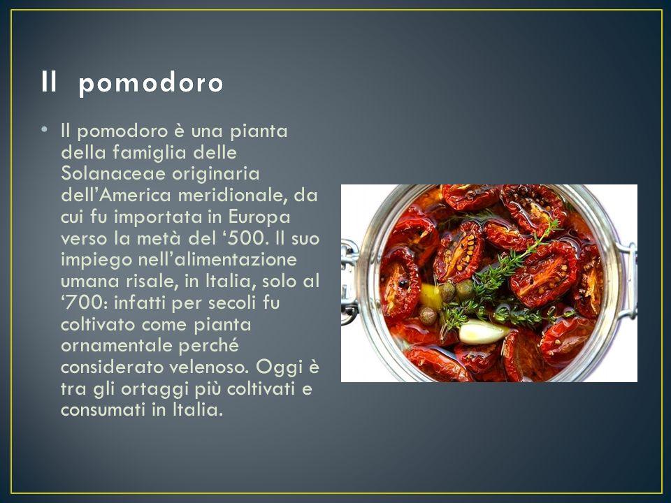 Il pomodoro è una pianta della famiglia delle Solanaceae originaria dell'America meridionale, da cui fu importata in Europa verso la metà del '500. Il