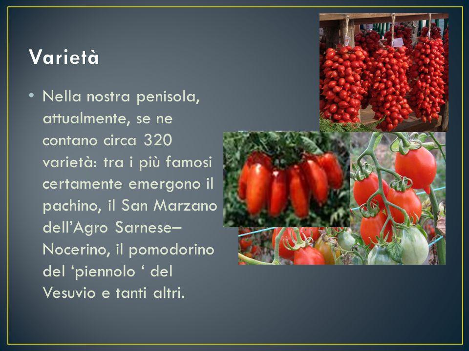Nella nostra penisola, attualmente, se ne contano circa 320 varietà: tra i più famosi certamente emergono il pachino, il San Marzano dell'Agro Sarnese
