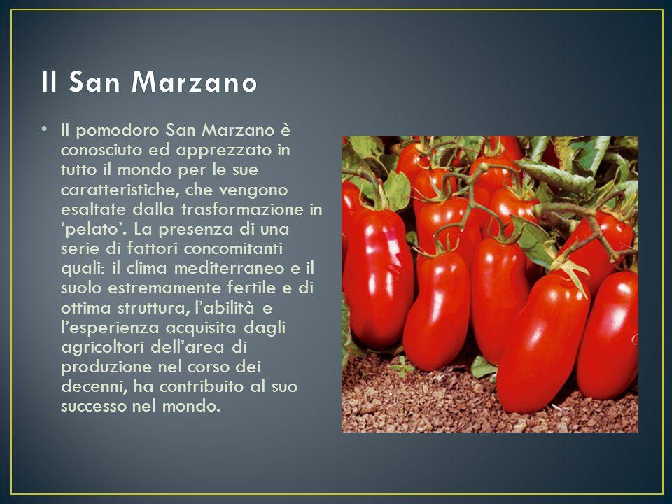 Il pomodoro San Marzano è conosciuto ed apprezzato in tutto il mondo per le sue caratteristiche, che vengono esaltate dalla trasformazione in 'pelato'