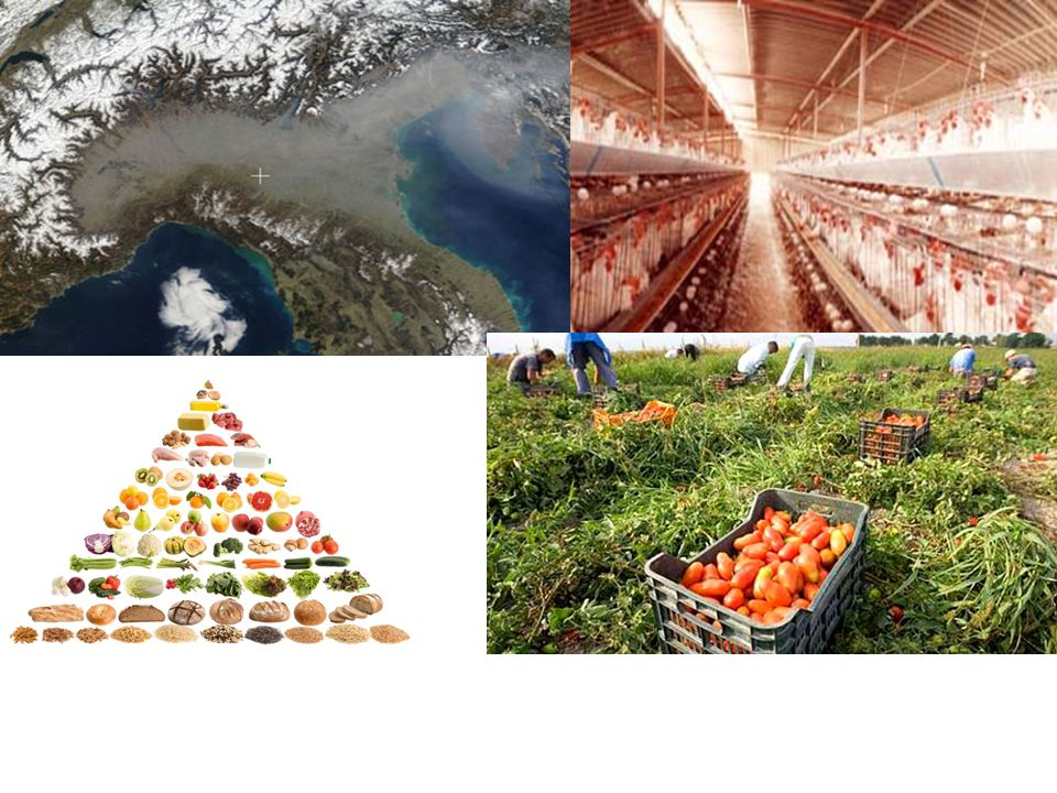Concorrenti carne soialegumi olio pesce Canapa Impatto ambientale Cruelty Inibitori tripsina OGM Difficoltà digestive Trattamenti chimici aa essenziali n.a.