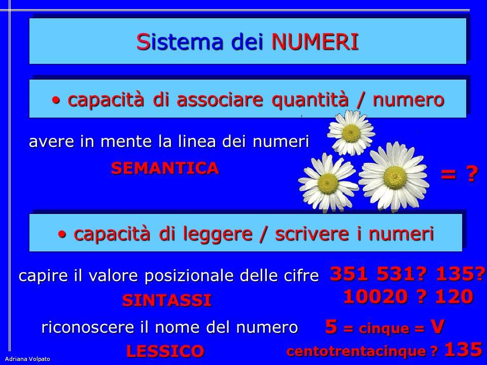 Sistema dei NUMERI capacità di associare quantità / numero capacità di associare quantità / numero avere in mente la linea dei numeri = .