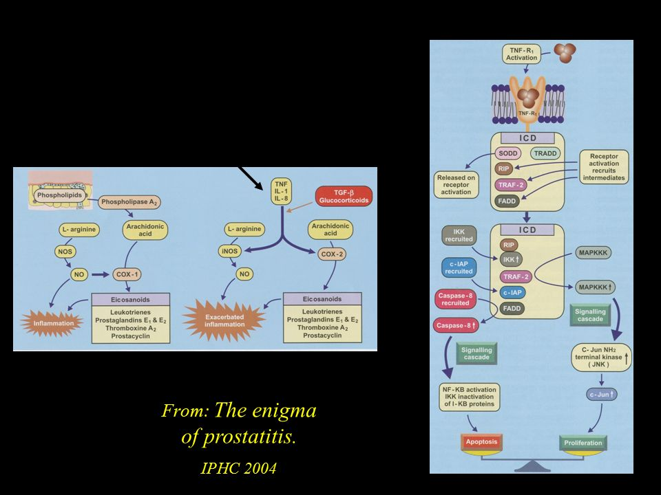 Teoria immunologica From: The enigma of prostatitis. IPHC 2004