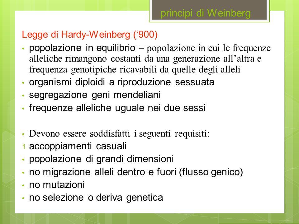 principi di Weinberg Legge di Hardy-Weinberg ('900) popolazione in equilibrio = popolazione in cui le frequenze alleliche rimangono costanti da una ge