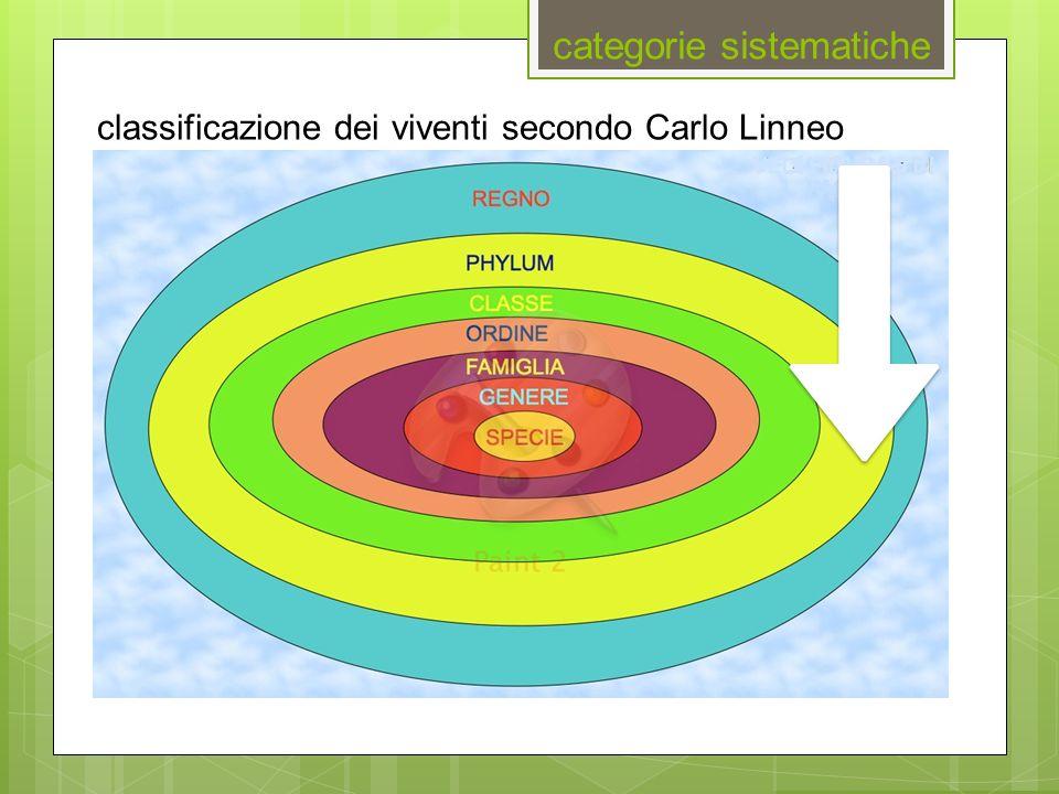 categorie sistematiche classificazione dei viventi secondo Carlo Linneo