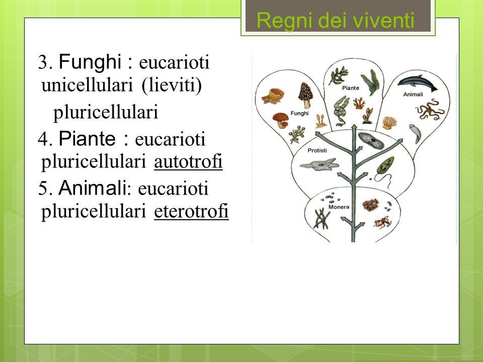 Regni dei viventi 3. Funghi : eucarioti unicellulari (lieviti) pluricellulari 4. Piante : eucarioti pluricellulari autotrofi 5. Animali : eucarioti pl