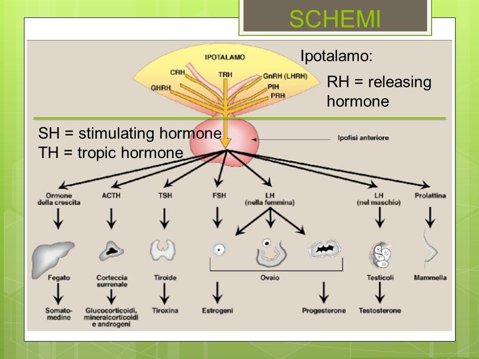 SCHEMI SH = stimulating hormone TH = tropic hormone RH = releasing hormone Ipotalamo: