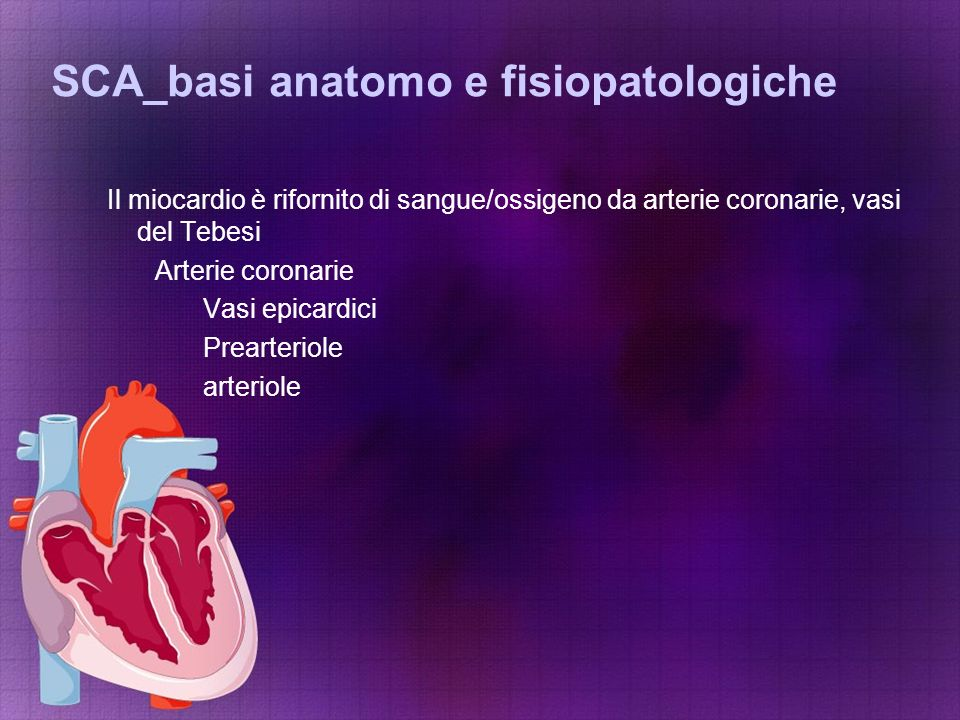 SCA_basi anatomo e fisiopatologiche Il miocardio è rifornito di sangue/ossigeno da arterie coronarie, vasi del Tebesi Arterie coronarie Vasi epicardic