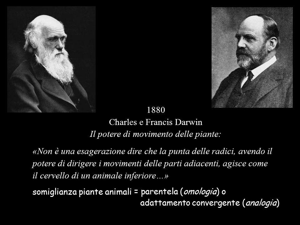 Darwin 'pensa per storie' (prima  dopo – contesto - pertinenza) Che storia c'è dietro le caratteristiche delle piante.
