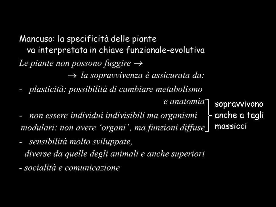 Video (25''  5 giorni) https://www.youtube.com/watch?v=dTljaIVseTc https://www.youtube.com/watch?v=dTljaIVseTc «Io sono convinto, Sir, che i viticci riescano a vedere» (C.