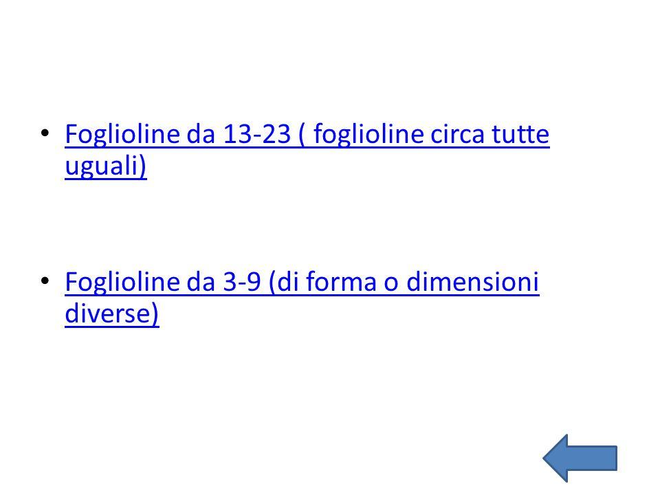 Foglioline da 13-23 ( foglioline circa tutte uguali) Foglioline da 13-23 ( foglioline circa tutte uguali) Foglioline da 3-9 (di forma o dimensioni div