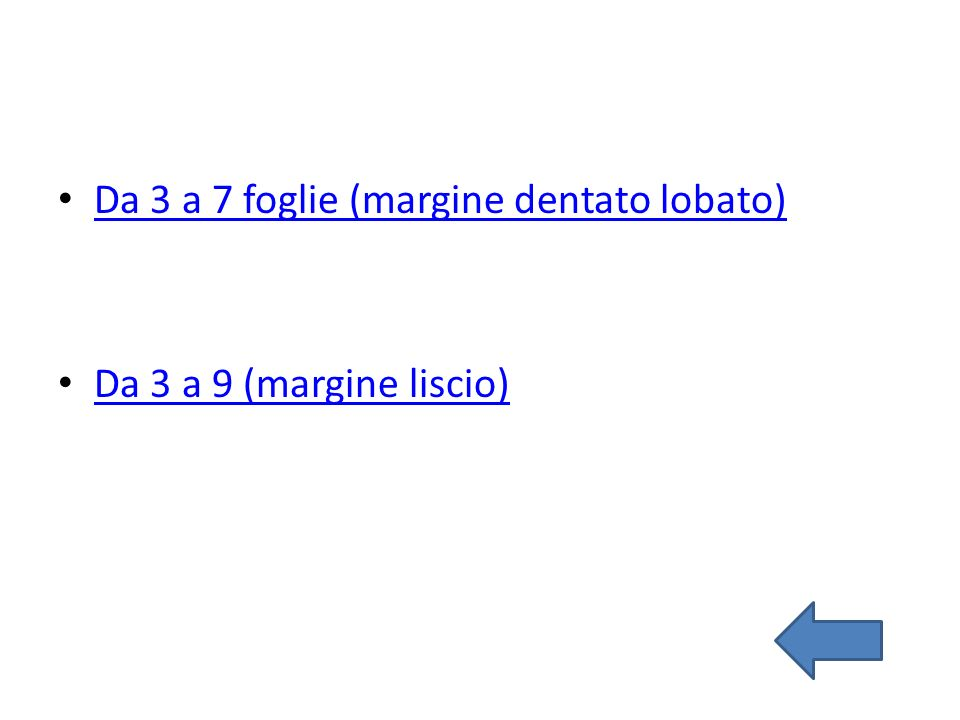 Da 3 a 7 foglie (margine dentato lobato) Da 3 a 9 (margine liscio)