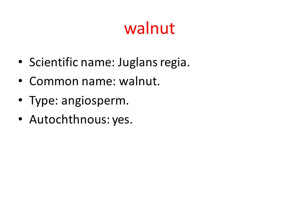 walnut Scientific name: Juglans regia. Common name: walnut. Type: angiosperm. Autochthnous: yes.