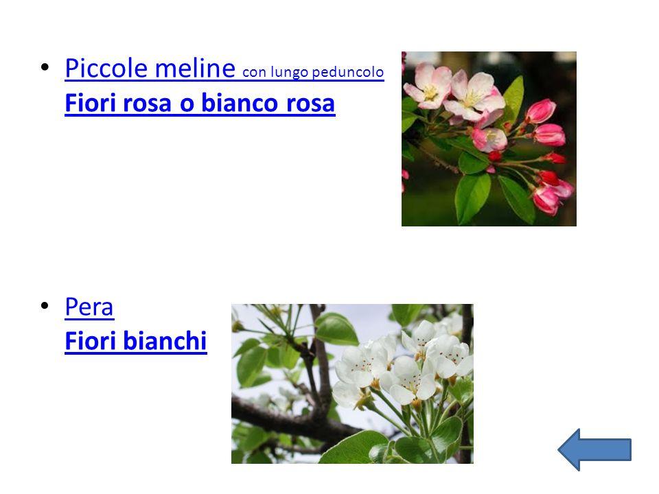 Piccole meline con lungo peduncolo Fiori rosa o bianco rosa Piccole meline con lungo peduncolo Fiori rosa o bianco rosa Pera Fiori bianchi Pera Fiori