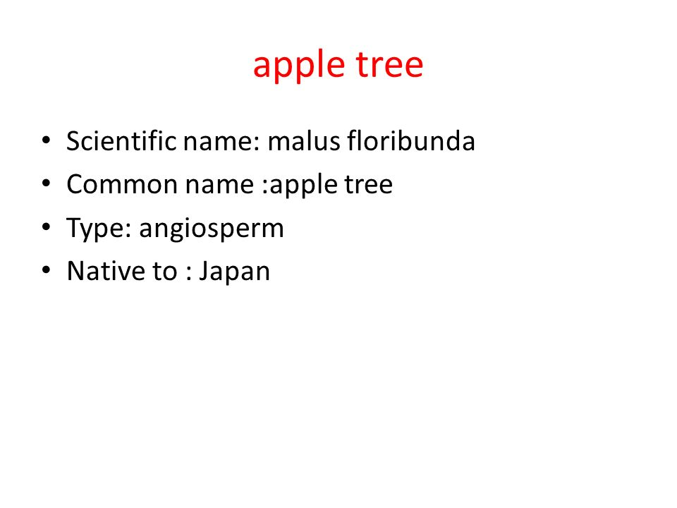 apple tree Scientific name: malus floribunda Common name :apple tree Type: angiosperm Native to : Japan