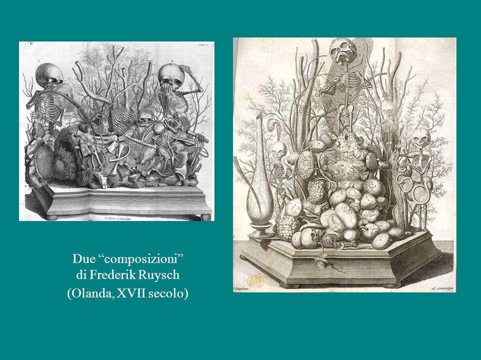 """Due """"composizioni"""" di Frederik Ruysch (Olanda, XVII secolo)"""