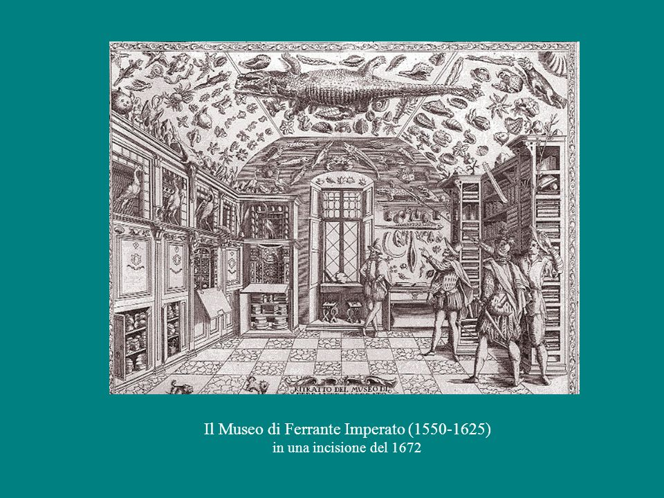 A sin.: Manfredo Settala (1600-1680) in un ritratto di Daniele Crespi del 1625 Sotto: l'immagine del Museo di Manfredo Settala contenuta nel Catalogo del 1664 Il Museo di Manfredo Settala n una incisione del 678