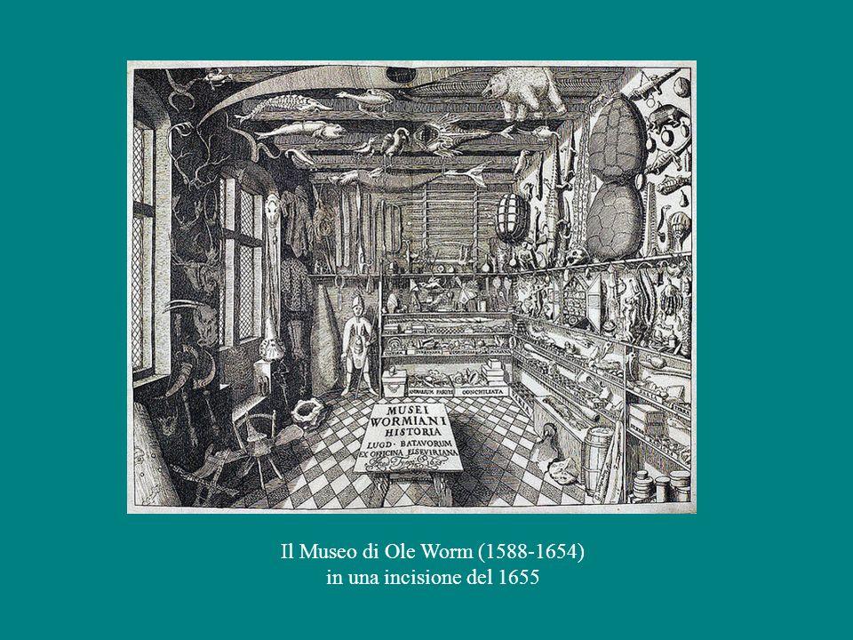 Il Museo di Ole Worm (1588-1654) in una incisione del 1655
