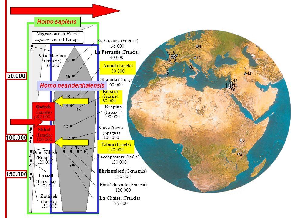 150.000 100.000 50.000 Cro-Magnon (Francia) 33 000 Qafzeh (Israele) 92 000 Skhul (Israele) 100 000 Laetoli (Tanzania) 130 000 Zuttiyeh (Israele) 150 0