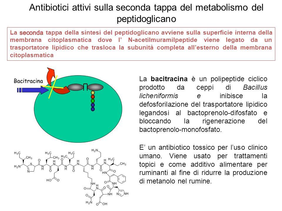 La bacitracina è un polipeptide ciclico prodotto da ceppi di Bacillus licheniformis e inibisce la defosforilazione del trasportatore lipidico legandosi al bactoprenolo-difosfato e bloccando la rigenerazione del bactoprenolo-monofosfato.