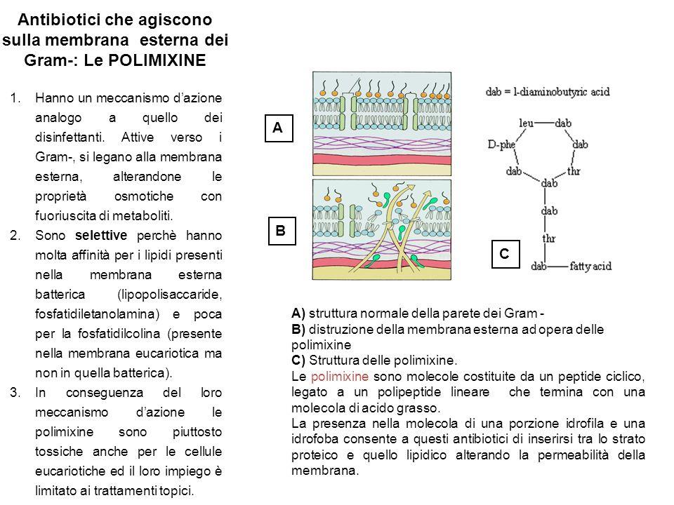 A B A) struttura normale della parete dei Gram - B) distruzione della membrana esterna ad opera delle polimixine C) Struttura delle polimixine.