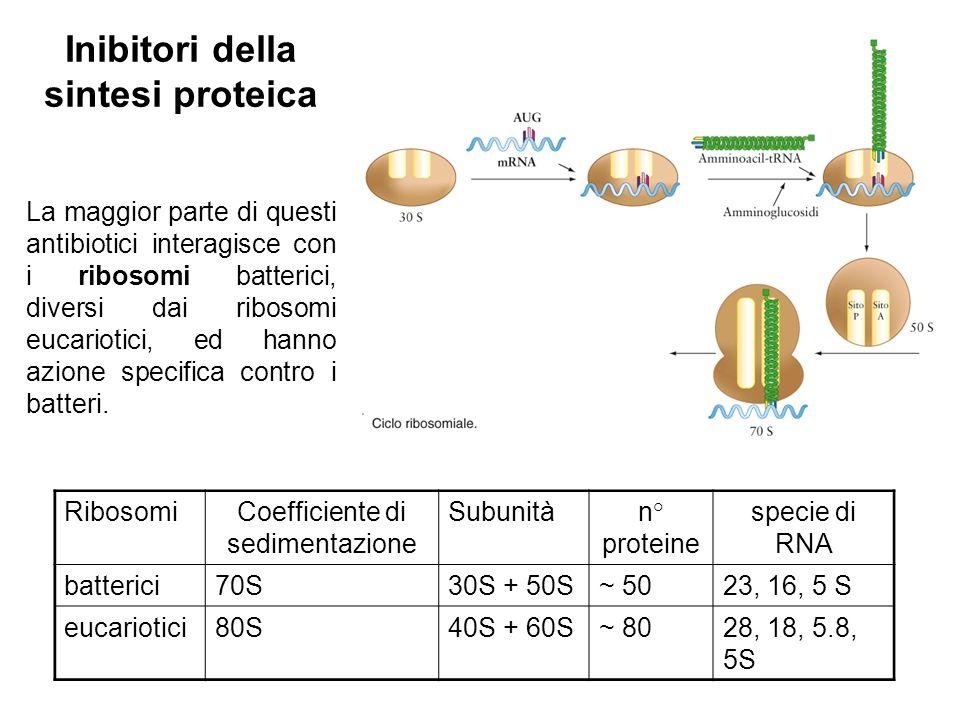 La maggior parte di questi antibiotici interagisce con i ribosomi batterici, diversi dai ribosomi eucariotici, ed hanno azione specifica contro i batteri.