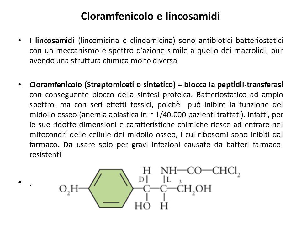 Cloramfenicolo e lincosamidi I lincosamidi (lincomicina e clindamicina) sono antibiotici batteriostatici con un meccanismo e spettro d'azione simile a quello dei macrolidi, pur avendo una struttura chimica molto diversa Cloramfenicolo (Streptomiceti o sintetico) = blocca la peptidil-transferasi con conseguente blocco della sintesi proteica.