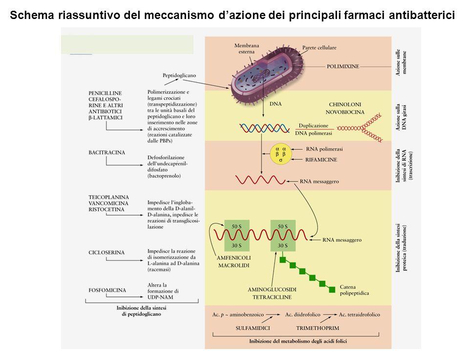Schema riassuntivo del meccanismo d'azione dei principali farmaci antibatterici