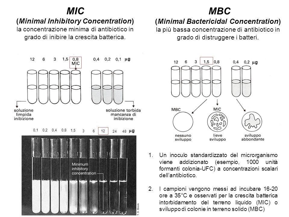 0,1 0,20,40,8 1,5 36 12 2448 MIC (Minimal Inhibitory Concentration) la concentrazione minima di antibiotico in grado di inibire la crescita batterica.