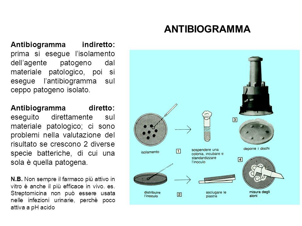 Antibiogramma indiretto: prima si esegue l'isolamento dell'agente patogeno dal materiale patologico, poi si esegue l'antibiogramma sul ceppo patogeno isolato.