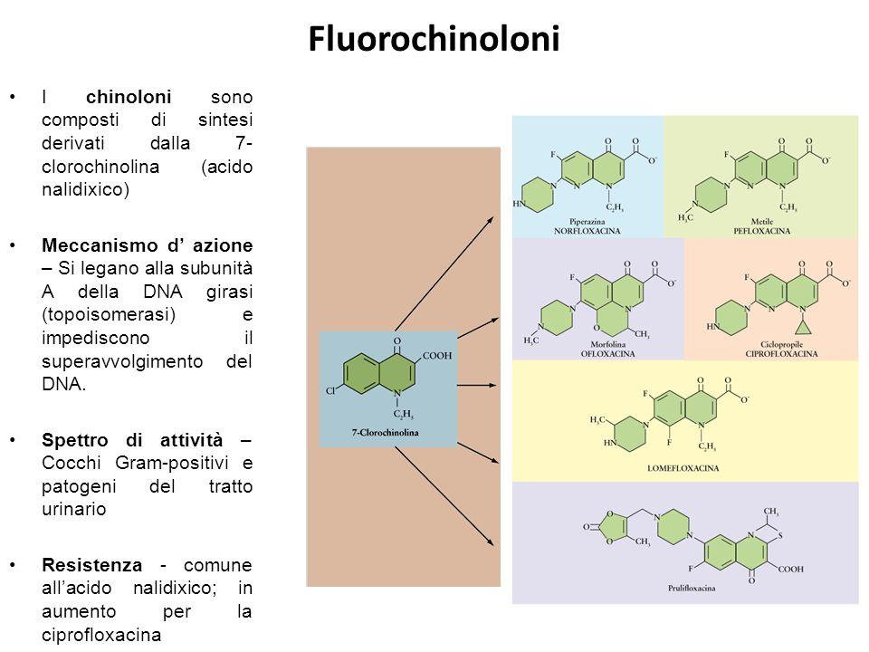 Fluorochinoloni I chinoloni sono composti di sintesi derivati dalla 7- clorochinolina (acido nalidixico) Meccanismo d' azione – Si legano alla subunità A della DNA girasi (topoisomerasi) e impediscono il superavvolgimento del DNA.