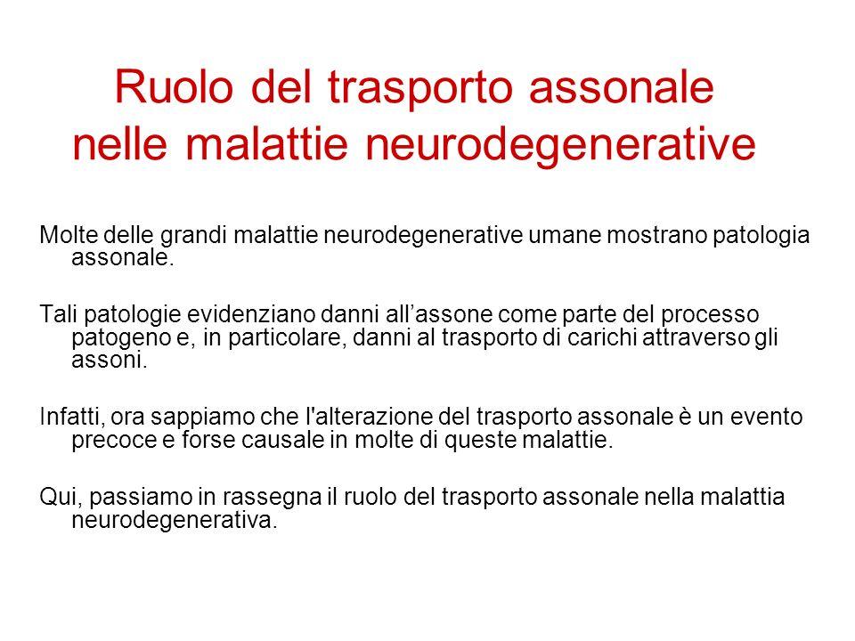 Molte delle grandi malattie neurodegenerative umane mostrano patologia assonale.