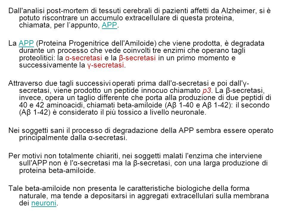 Dall analisi post-mortem di tessuti cerebrali di pazienti affetti da Alzheimer, si è potuto riscontrare un accumulo extracellulare di questa proteina, chiamata, per l'appunto, APP.APP La APP (Proteina Progenitrice dell Amiloide) che viene prodotta, è degradata durante un processo che vede coinvolti tre enzimi che operano tagli proteolitici: la α-secretasi e la β-secretasi in un primo momento e successivamente la γ-secretasi.APP Attraverso due tagli successivi operati prima dall α-secretasi e poi dall γ- secretasi, viene prodotto un peptide innocuo chiamato p3.
