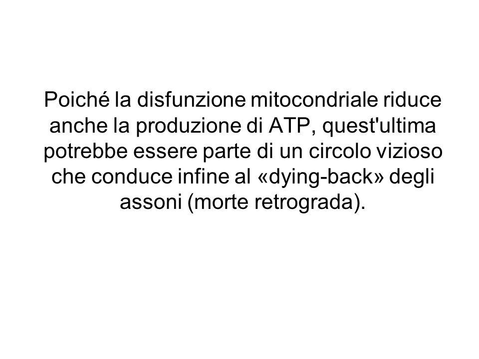 Poiché la disfunzione mitocondriale riduce anche la produzione di ATP, quest ultima potrebbe essere parte di un circolo vizioso che conduce infine al «dying-back» degli assoni (morte retrograda).