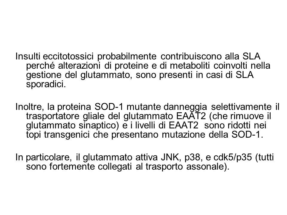 Insulti eccitotossici probabilmente contribuiscono alla SLA perché alterazioni di proteine e di metaboliti coinvolti nella gestione del glutammato, sono presenti in casi di SLA sporadici.
