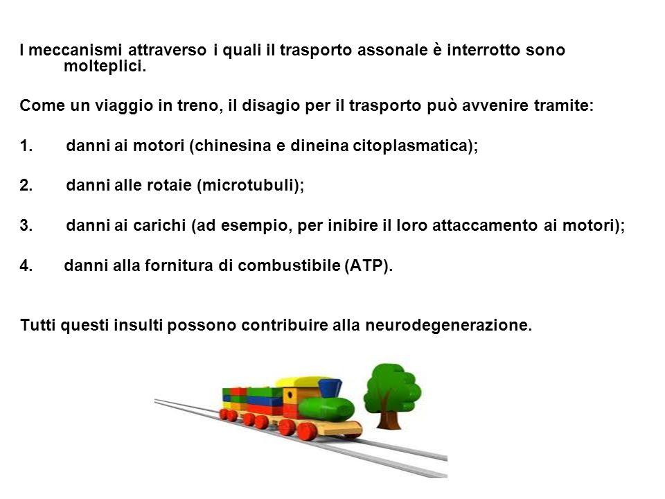 I meccanismi attraverso i quali il trasporto assonale è interrotto sono molteplici. Come un viaggio in treno, il disagio per il trasporto può avvenire