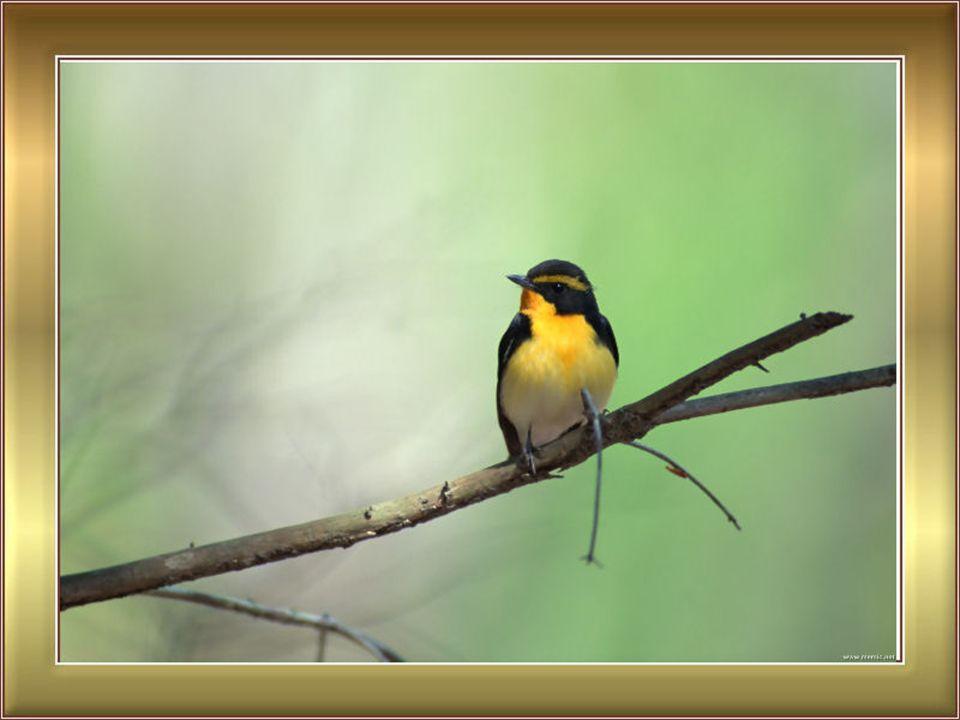 Uccelli L'uccello in gabbia, non canta per amore, canta per rabbia.