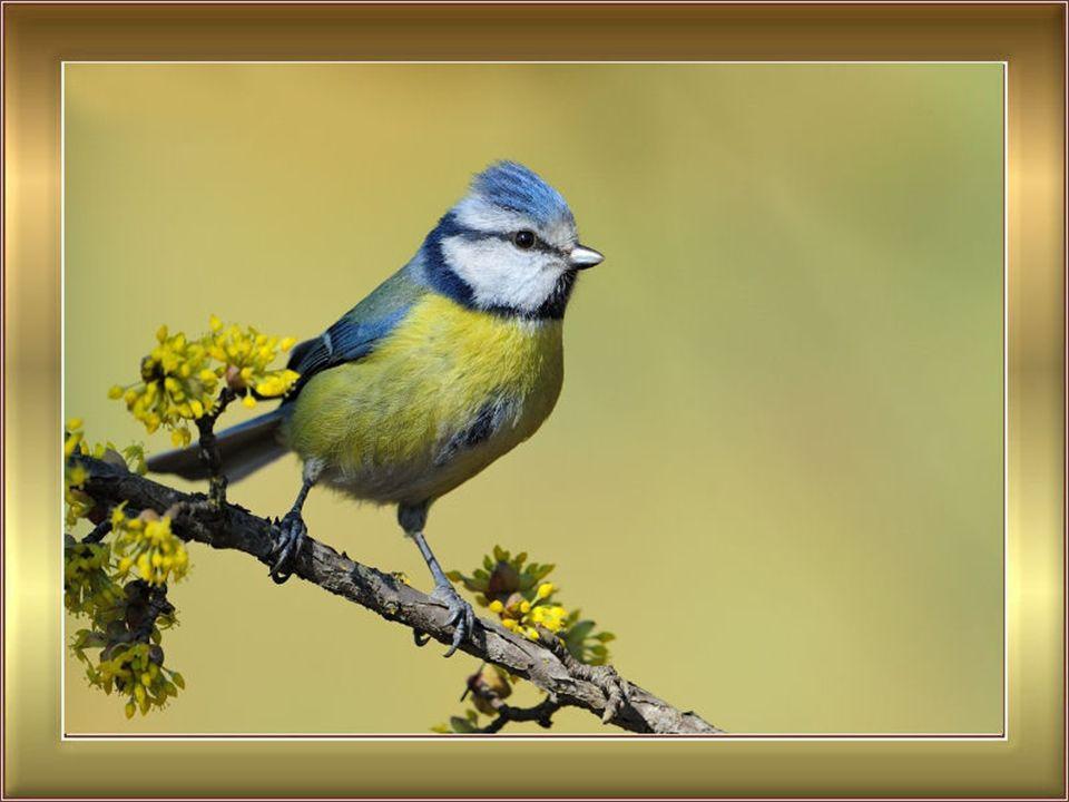Come volo straripante di uccelli incitati tutti i miei ricordi si abbattono su di me, si abbattono nel giallo fogliame del mio cuore che contempla il