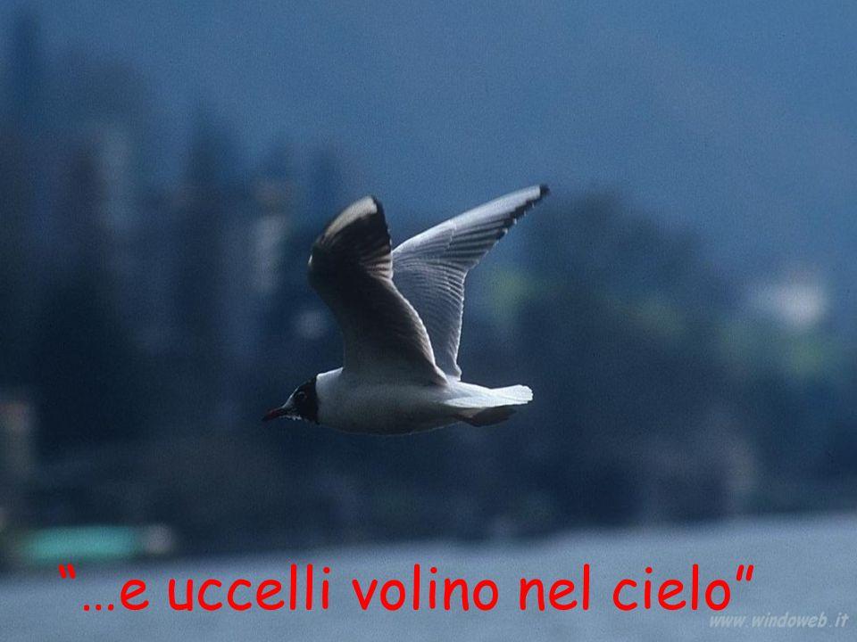 """""""…e uccelli volino nel cielo"""""""