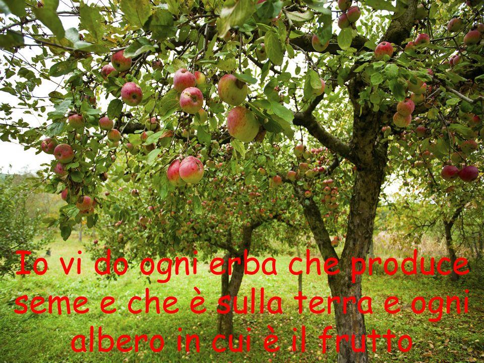 Io vi do ogni erba che produce seme e che è sulla terra e ogni albero in cui è il frutto