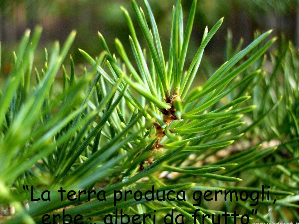 """""""La terra produca germogli, erbe… alberi da frutto"""""""